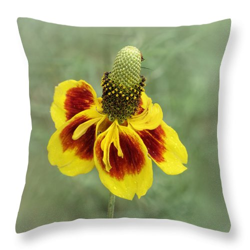 Bloom Throw Pillow featuring the photograph Mexican Hat by David and Carol Kelly