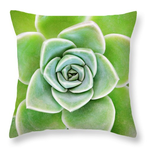 Echeveria Elegans Throw Pillow featuring the photograph Mexican Snowball Succulent by Neil Overy