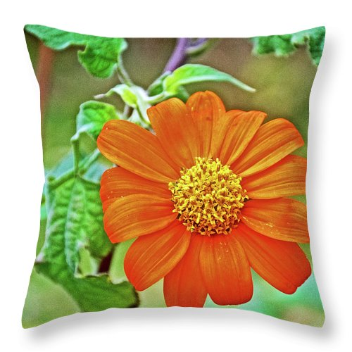 Mexican Sunflower Along White Pine Trail Near Rockford Throw Pillow featuring the photograph Mexican Sunflower Along White Pine Trail In Kent County, Michigan by Ruth Hager
