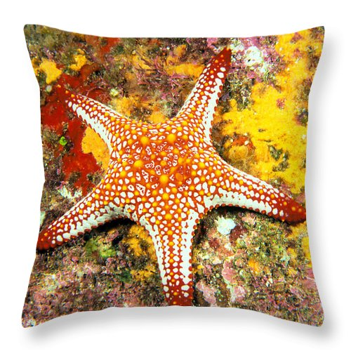 Animal Art Throw Pillow featuring the photograph Mexico, Gulf Sea Star by Dave Fleetham - Printscapes