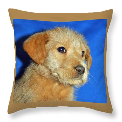 Dog Throw Pillow featuring the photograph Michael Portrait by Eric Liller