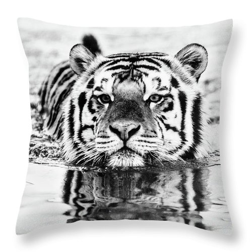 Tiger Throw Pillow featuring the photograph Big Mike by Scott Pellegrin