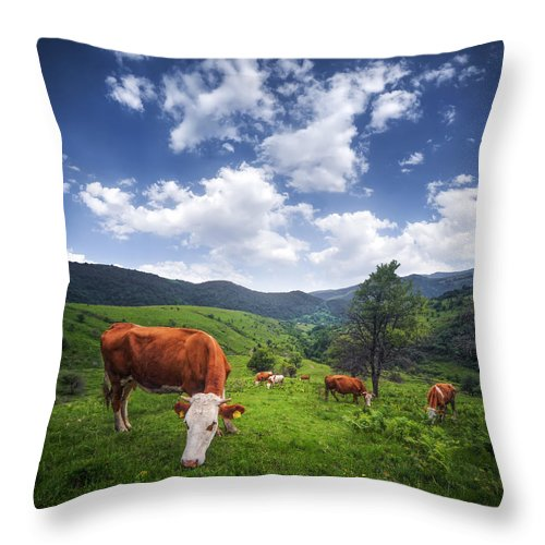 Agriculture Throw Pillow featuring the photograph Milka by Bess Hamiti