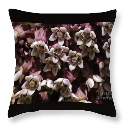 Milkweed Throw Pillow featuring the photograph Milkweed Florets by Randy Bodkins