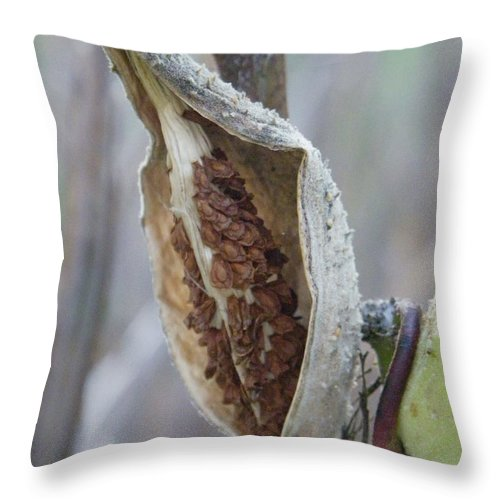 Nature Throw Pillow featuring the photograph Milkweed by Peggy King
