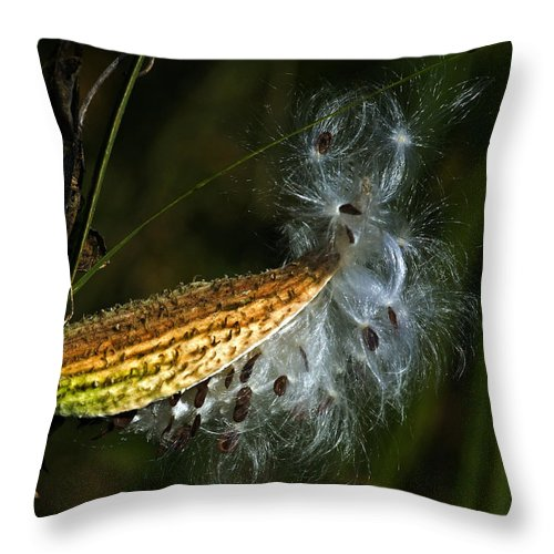 Autumn Throw Pillow featuring the photograph Milkweed Pod by Al Mueller