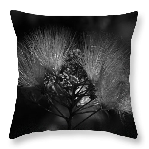 Black And White Throw Pillow featuring the photograph Mimosa Flowers by Kathy Kirkland