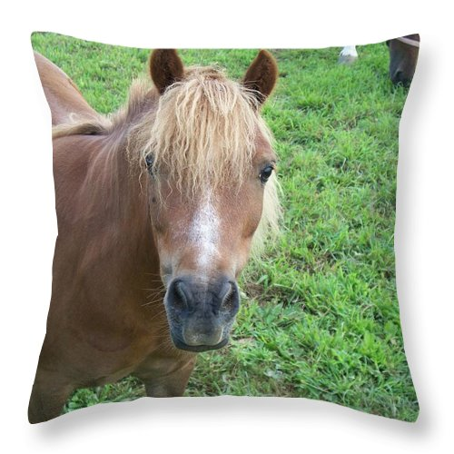Miniture Throw Pillow featuring the painting Miniature Horse by Eric Schiabor