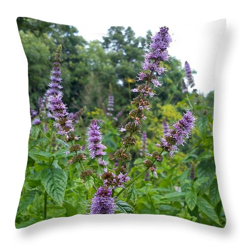 Mint Throw Pillow featuring the photograph Mint by Are Lund