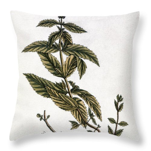 1730s Throw Pillow featuring the photograph Mint Plant, 1735 by Granger