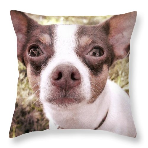Dog Throw Pillow featuring the photograph Miss Lily by JAMART Photography