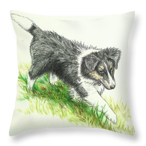 Sheltie Throw Pillow featuring the drawing Miss Mary by Sue Bonnar