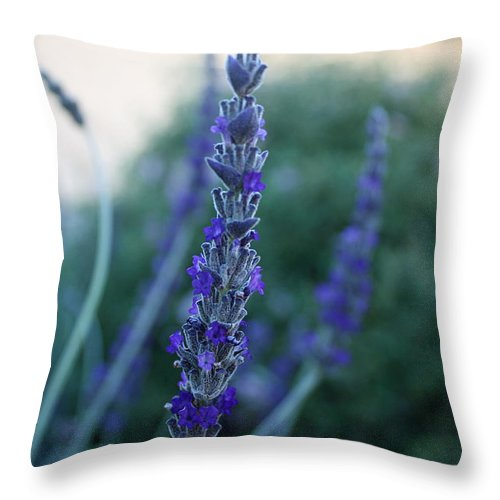 Lavender Throw Pillow featuring the photograph Mission Lavender by Kathy Yates