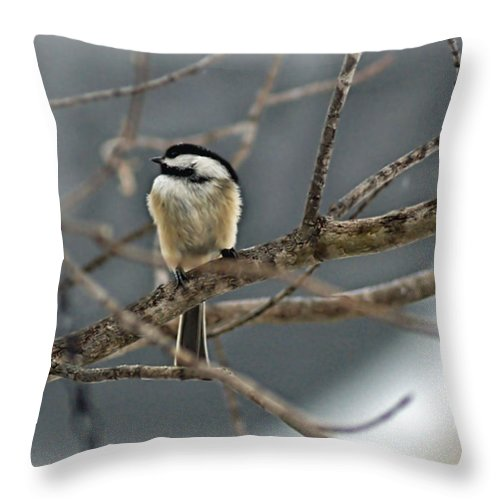 Lone Bird Throw Pillow featuring the photograph Misty Sentry by Catherine Melvin