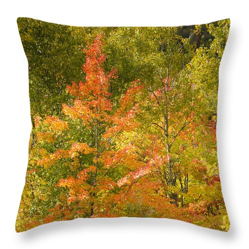 Tree Throw Pillow featuring the photograph Mixed Autumn by Phill Doherty