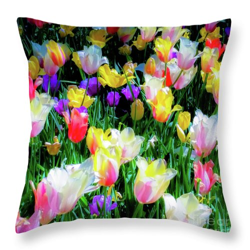Tulips Throw Pillow featuring the photograph Mixed Tulips In Bloom by D Davila