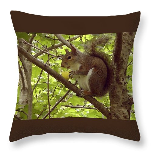Squirrel Throw Pillow featuring the photograph Mmmmm Good by Mary Rogers