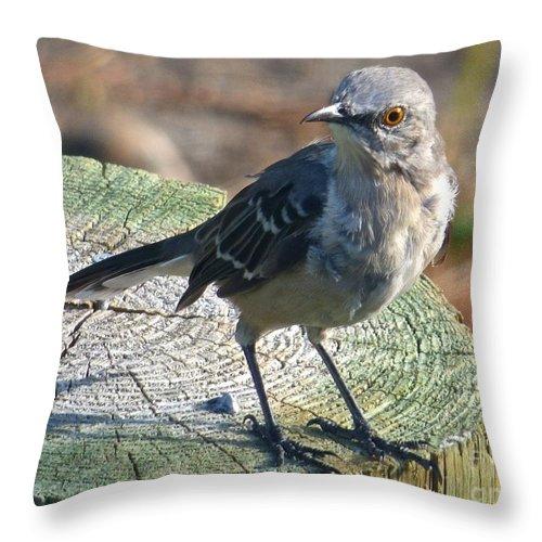 Mockingbird Throw Pillow featuring the photograph Mockingbird by Jean Wright
