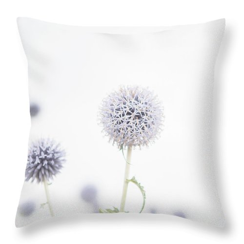 Allium Throw Pillow featuring the photograph Modern Allium by Lisa Russo
