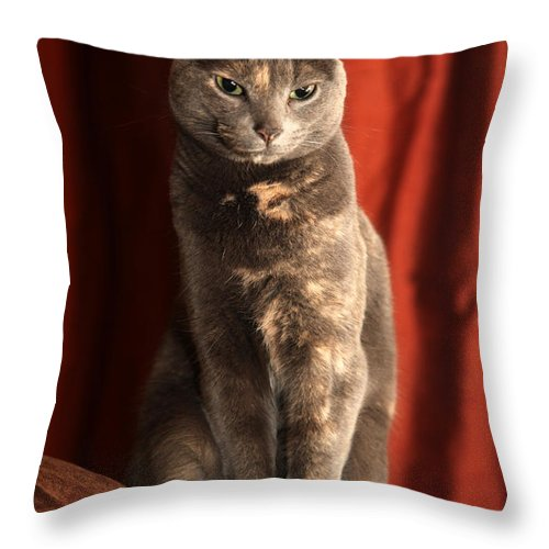 Cat Throw Pillow featuring the photograph Mollie by Amanda Barcon