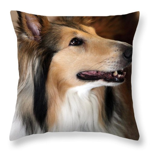 Collie Throw Pillow featuring the photograph Molly by Amanda Barcon