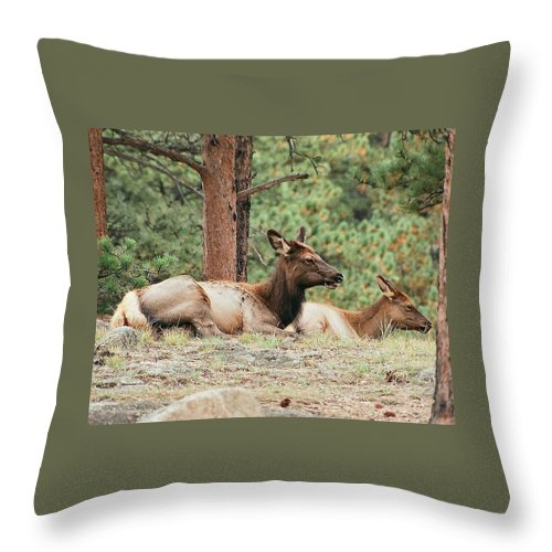 Colorado Throw Pillow featuring the photograph Mom And Kids Taking A Nap by Bob W Brown