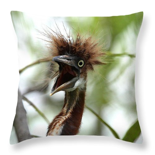 Immature Tri-colored Heron Throw Pillow featuring the photograph Momma I Am Hungry by Barbara Bowen