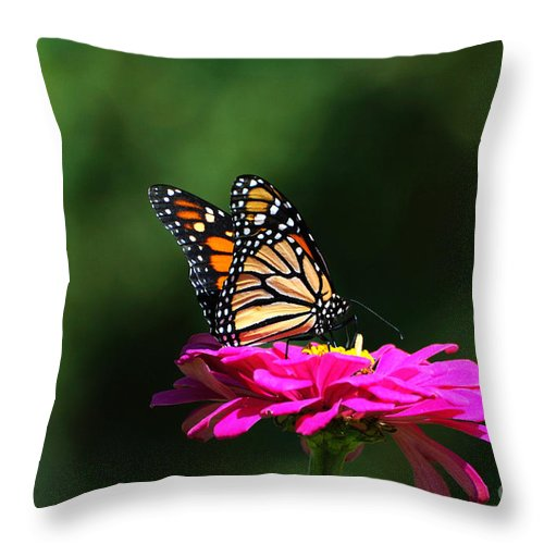 Monarch Butterfly Throw Pillow featuring the photograph Monarch 7 by Edward Sobuta