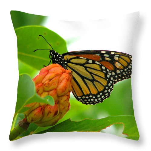 Bug Throw Pillow featuring the photograph Monarch At Rest by David Dunham