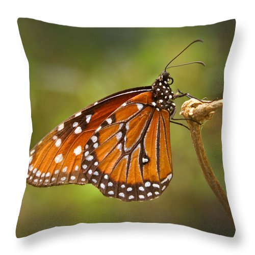 Monarch Throw Pillow featuring the photograph Monarch Butterfly by Heather Coen