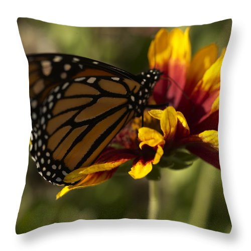 Butterfly Throw Pillow featuring the photograph Monarch Butterfly by Jessica Wakefield
