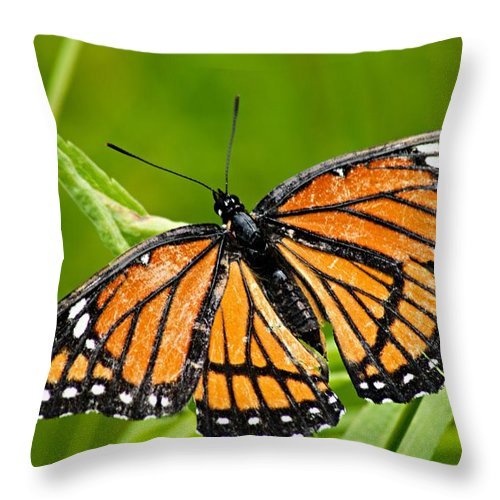 Monarch Butterfly Throw Pillow featuring the photograph Monarch Butterfly by Larry Ricker