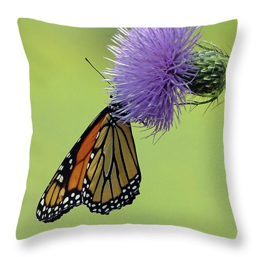 Butterfly Throw Pillow featuring the photograph Monarch by Deborah England