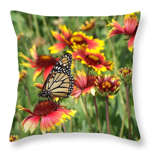 Nature Throw Pillow featuring the photograph Monarch On Blanketflower by Peg Urban