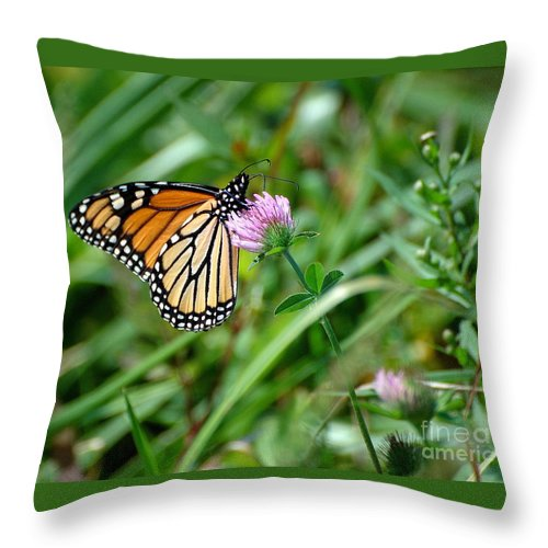 Monarch Throw Pillow featuring the photograph Monarch On Clover by Edward Sobuta