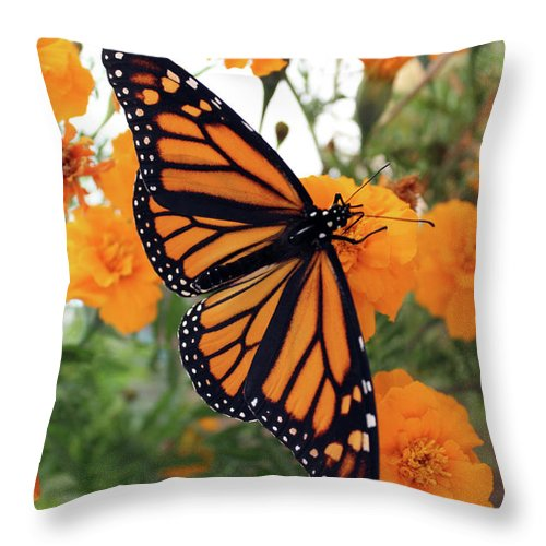 Bugs Throw Pillow featuring the photograph Monarch Series 1 by Samantha Burrow