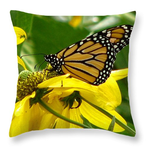 Bug Throw Pillow featuring the photograph Monarchs Gold by David Dunham