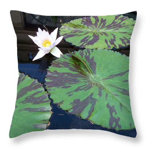 Photograph Throw Pillow featuring the photograph Monet Lilies White by Eric Schiabor