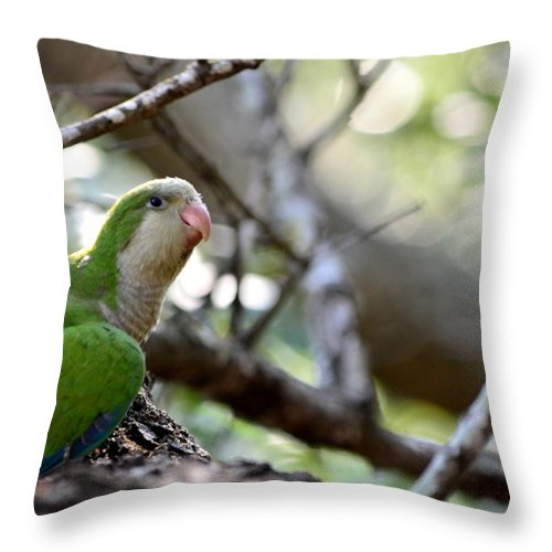 Monk Parrot Throw Pillow featuring the photograph Monk Parrot by Therese Palombi