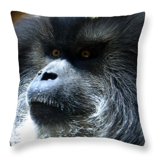 Monkey Throw Pillow featuring the photograph Monkey Stare by Anthony Jones