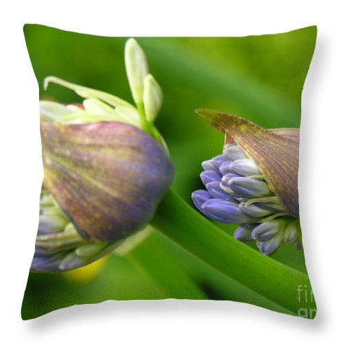 Blue Throw Pillow featuring the photograph Montana Blue by Diane Greco-Lesser