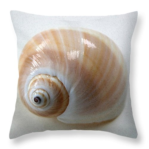 Shell Throw Pillow featuring the photograph Moonsnail by Mary Haber