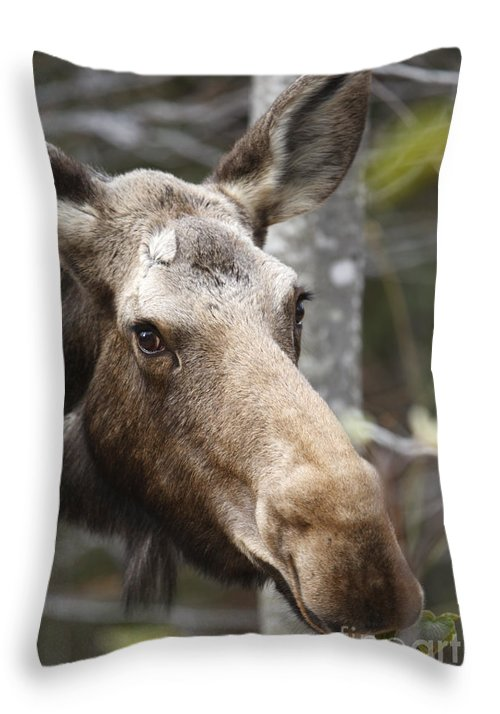 Mountain Throw Pillow featuring the photograph Moose - White Mountains New Hampshire Usa by Erin Paul Donovan