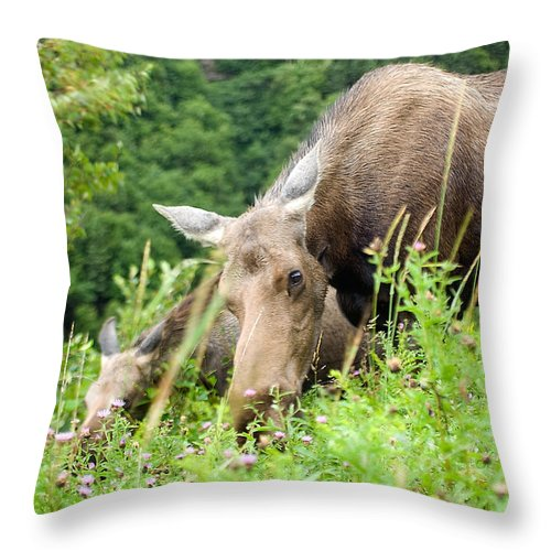 Moose Throw Pillow featuring the photograph moose and Calf-1 by Steve Somerville