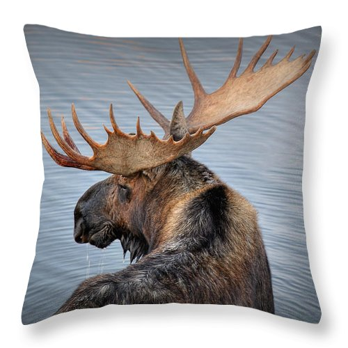 Moose Throw Pillow featuring the photograph Moose Drool by Ryan Smith
