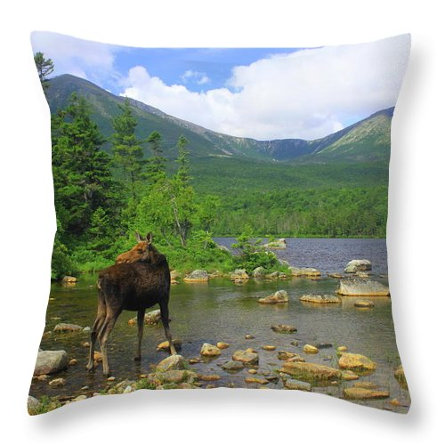 Wildlife Throw Pillow featuring the photograph Moose Looking Back Sandy Stream Pond by John Burk
