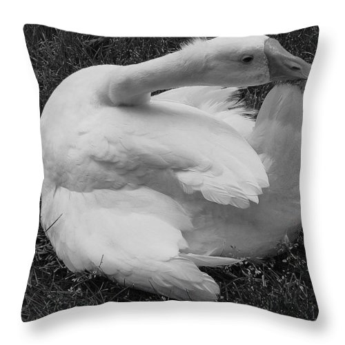 Goose Throw Pillow featuring the photograph Moose The Goose by Margaret Bobb