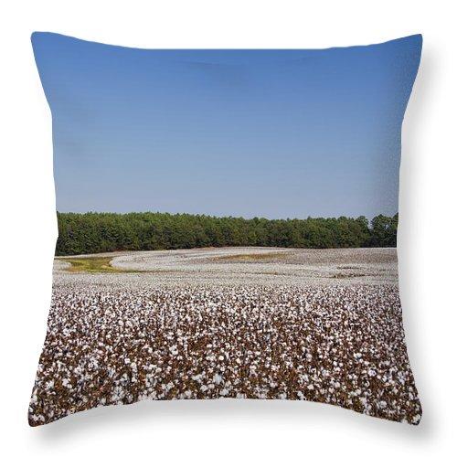 Cotton Throw Pillow featuring the photograph Morgan County Alabama Cotton Crop by Kathy Clark