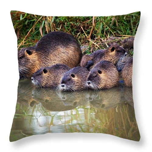 Nutria Throw Pillow featuring the photograph Morning Clean Up by Randall Ingalls