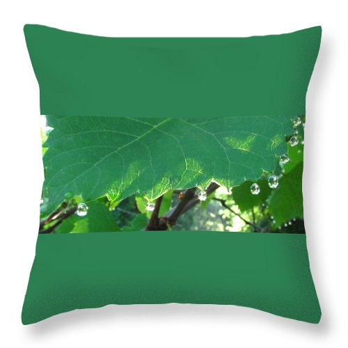 Morning Dew Images Prints Forest Flora Photograph Prints Liquid Gems Forest Jewelry Water Droplets Sunlight Woods Forest Complexity Throw Pillow featuring the photograph Morning Dew Diamonds by Joshua Bales